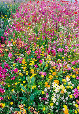 Wild Flowers 3 Print by Mike Penney
