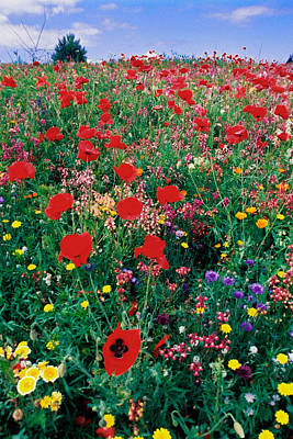 Wild Flowers 4 Print by Mike Penney
