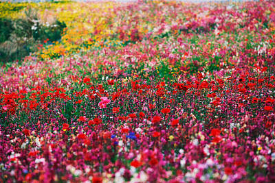 Wild Flowers 5 Print by Mike Penney