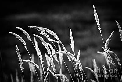 Grass Photograph - Wild Grass by Elena Elisseeva
