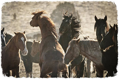 Wild Horse Battle D1713 Print by Wes and Dotty Weber