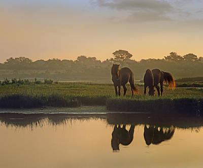 Horse Farm Maryland Photograph - Wild Horse Pair Grazing At Assateague by Tim Fitzharris
