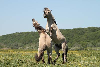Wild Horses Print by Masterbrickert Photography