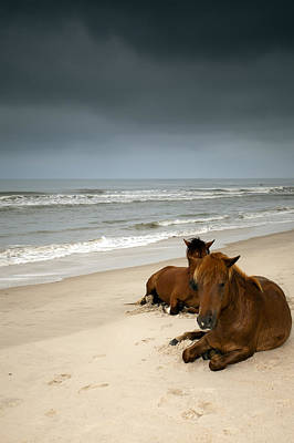 Y120817 Photograph - Wild Horses by photo by Edward Kreis, dK.i imaging