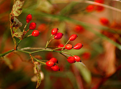 Floral Photograph - Wild Red Berry Reflections by LeeAnn McLaneGoetz McLaneGoetzStudioLLCcom