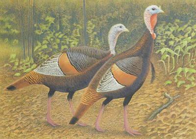 Wild Turkey Drawing - Wild Turkey Pair by Alan Suliber