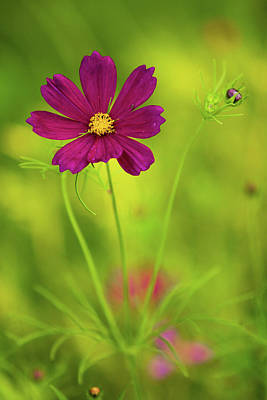 Wildflower Print by Image by Rebecca Weaver, RWeaverNest Photography