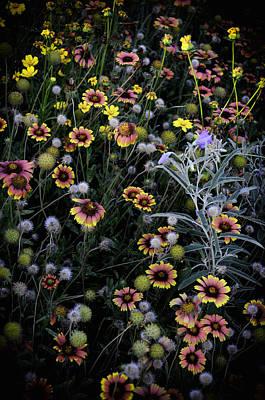 Wildflowers 5 Print by Mauricio Jimenez