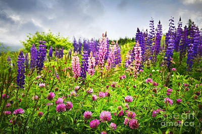 Sky Photograph - Wildflowers In Newfoundland by Elena Elisseeva