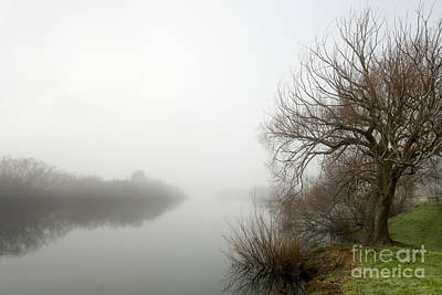 Willow In Fog Print by David Lade