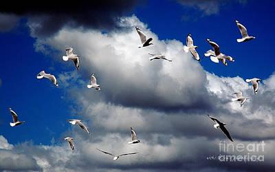 Grey Clouds Photograph - Wind Sailing Seagulls by Vicki Ferrari