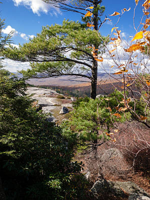 Shawanagunk Mountains Photograph - Windswept Pine by Jim DeLillo
