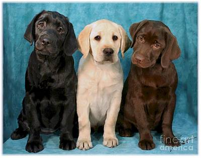 Chocolate Labrador Retriever Digital Art - Winkin Blinkin And Nod  Lab Puppies by Maxine Bochnia