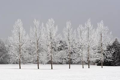 Winter, Calgary, Alberta, Canada Print by Michael Interisano