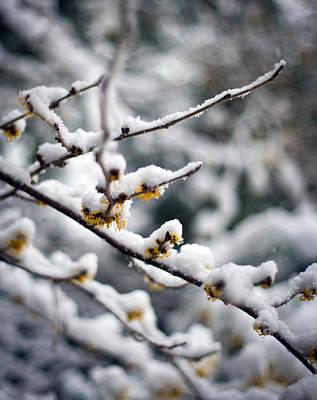 Winter Flowers Photograph - Winter Fleurs by Mike Reid