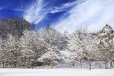 Winter Forest Covered With Snow Print by Elena Elisseeva