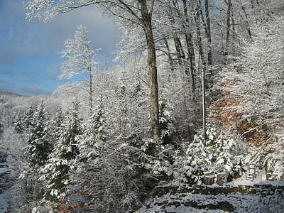 Photograph - Winter In The Laurentians by Marlene Roy