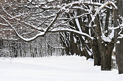Snowstorm Photograph - Winter Park With Snow Covered Trees by Elena Elisseeva
