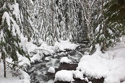 Winter Snow Along Still Creek In Mt Print by Craig Tuttle