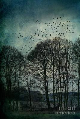 Winter Trees Print by Ann Garrett