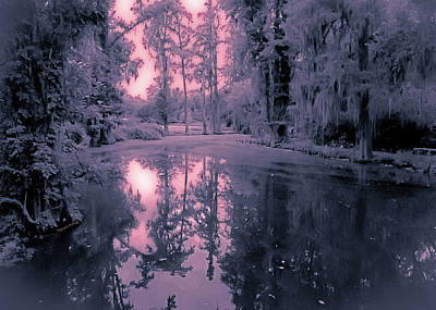 Winterland In The Swamp Print by DigiArt Diaries by Vicky B Fuller