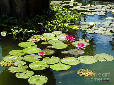 Wishes Among The Water Lilies Print by Methune Hively