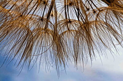 Weed Photograph - Wispy One by Steve Harrington