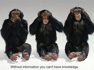 Chimpanzee Painting - Without Information You Cant Have Knowledge by Pg Reproductions
