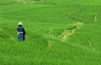 Woman Looking Over Valley Of Rice Outside Sapa Print by David Greedy