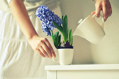Woman Watering Blue Hyacinth Print by Photo by Ira Heuvelman-Dobrolyubova
