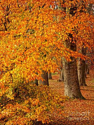 Wonderful Autumn Print by Lutz Baar