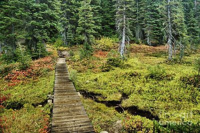 Wooden Foot Bridge Over Stream Print by Ned Frisk