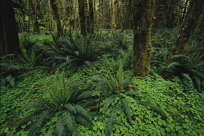 Woodland Rain Forest View With Mosses Print by Melissa Farlow
