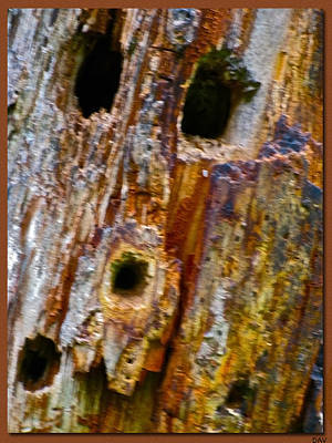 Woodpecker Mixed Media - Woodpecker Texture Work by Debra     Vatalaro