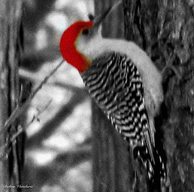 Woodpecker Mixed Media - Woodpecker Touch Of Red by Debra     Vatalaro