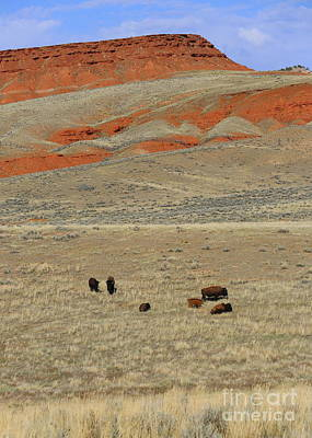 Thermopolis Photograph - Wyoming Red Cliffs And Buffalo by Carol Groenen