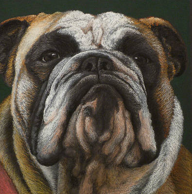 English Bulldog Drawing Painting - Ya Wanna Piece A Me by Norm Holmberg