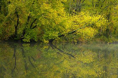 Yellow Autumn Print by Karol Livote