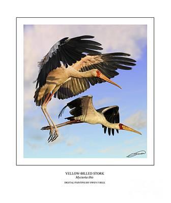 Stork Digital Art - Yellow-billed Ibis In Flight by Owen Bell