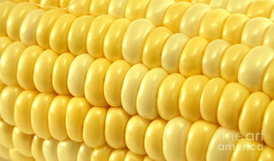 Vegetables Photograph - Yellow Corn Macro by Blink Images