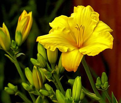 Yellow Daylily Print by James Steele
