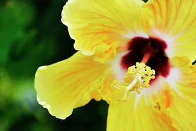 Hibiscus Photograph - Yellow Hibiscus by Melanie Moraga