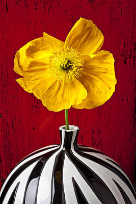 Yellow Iceland Poppy Print by Garry Gay