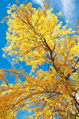Yellow On Blue Print by Bob and Nancy Kendrick
