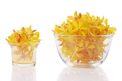 Yellow Orchid Heads Original by Atiketta Sangasaeng