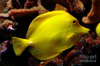 Yellow Tang Print by Pravine Chester