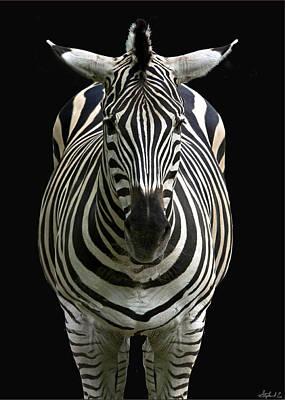 Photograph - Zebra Point Blank by Stephen EIS