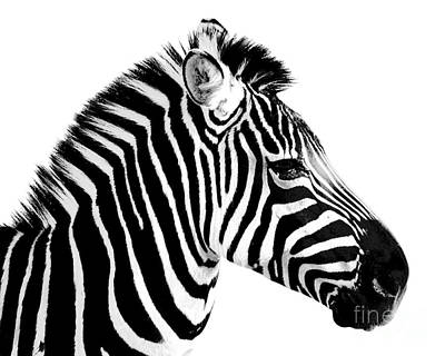 Of Zebras Photograph - Zebra by Rebecca Margraf