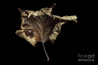 Autumn Leaf Print by Ann Garrett