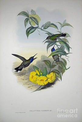 Yellow Beak Painting -  Blue-throated Cazique by Celestial Images